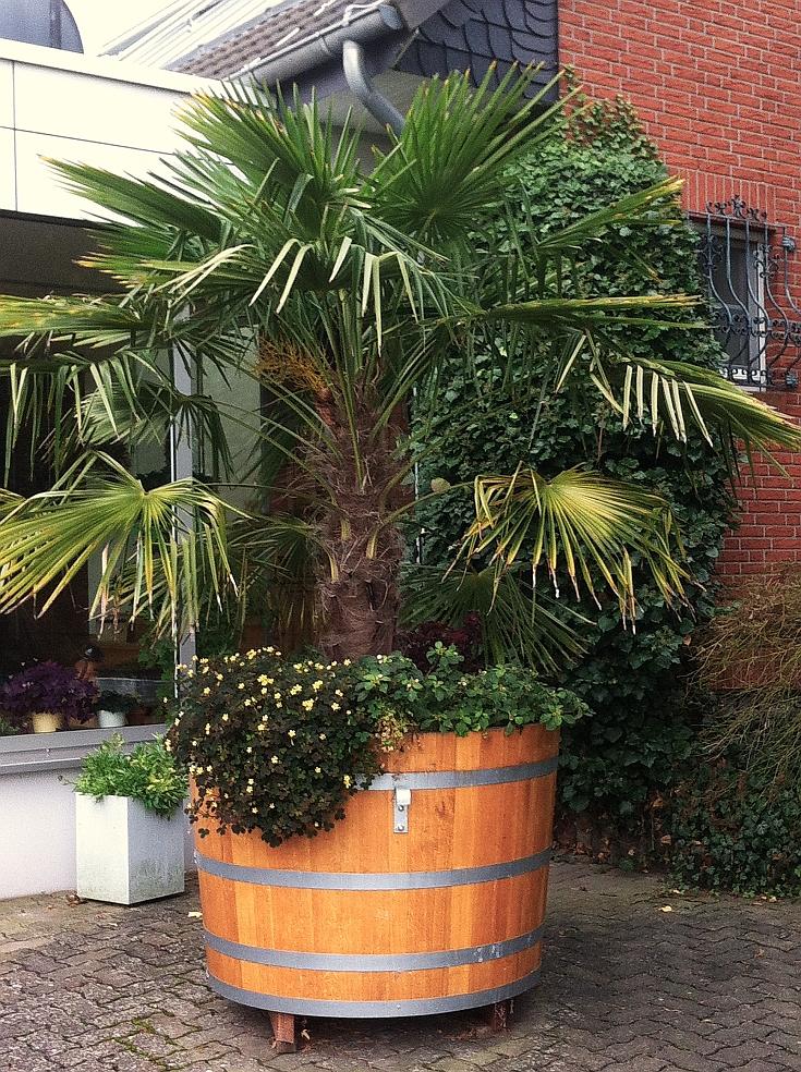 Große Pflanzkübel Für Palmen.Pflanzkübel Aus Holz Wellness Für Ihre Pflanze Highlight